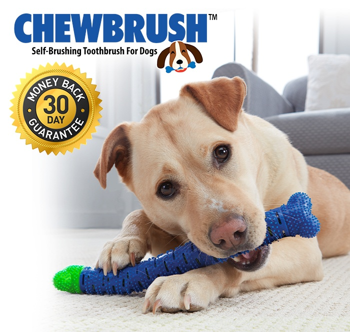 Chewbrush Self-Brushing Toothbrush For Dogs; 30 Day Money back guarantee; Dog using Chewbrush