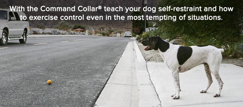 Does Don Sullivan Dog Training Work
